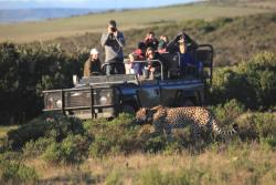 Garden Route Game Lodge Day Safaris