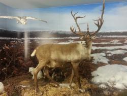 Ice Age Centre