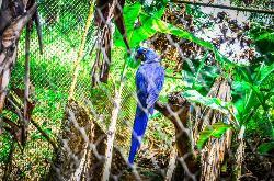 Parque Zoobotanico Getulio Vargas