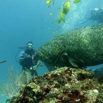 Osa Divers