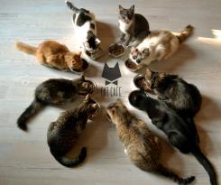 Cat Cafe Kačių Kavinė