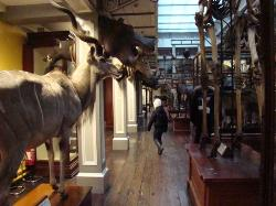 TCD Zoological Museum