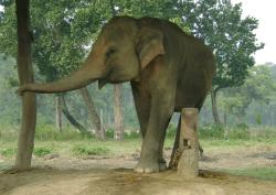 Elephant Breeding Centre