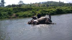 Chiang Mai Elephants Tours
