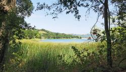 View from the cattail side of the lake.
