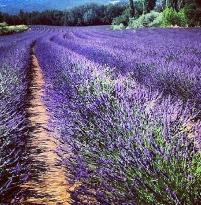 Travelling Provence