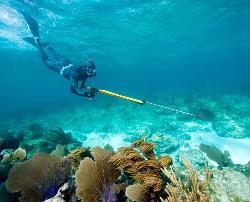 Reef Hunters Puerto Rico Spearfishing