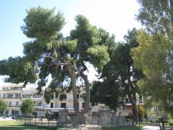 Αρχαιολογικός Χώρος Σπάρτης