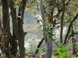 the river thru the trees