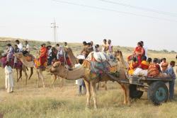 camel and camel cart