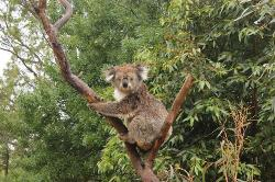 Jirrahlinga Koala & Wildlife Sanctuary