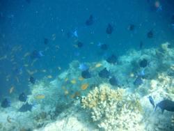 Banana Reef