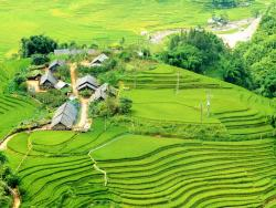 Muong Hoa Valley - One Day Tours