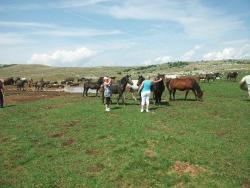 Wild Horses Safari