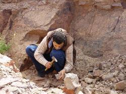 Driss Fossils