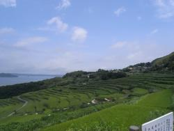 Doya Terraced Rice Field