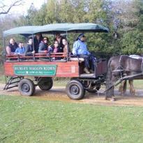 Burley Wagon Rides