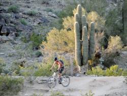 Cactus Adventures