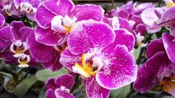 Orchid Park Indonesia Permai