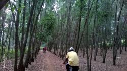 Turahalli Forest