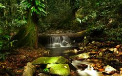 Daintree Rainforest - Cooper Creek Wilderness