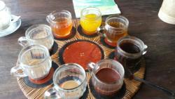 珊翠亚咖啡种植园