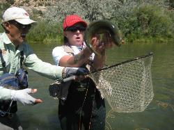 Cottonwood Anglers