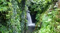 Eco Tour River Tubing Hibiscus Falls
