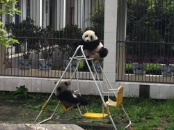 Panda Explore