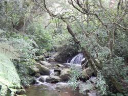 Anamudi Shola National Park
