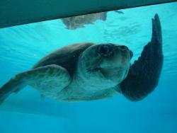 Marine Turtle Center