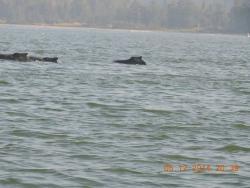 Dolphin Ride