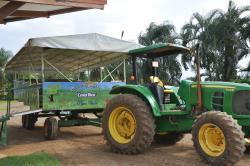 Finca Corsicana Pineapple Farm