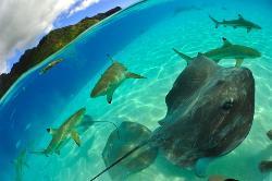 Moorea Adventure - Glass Bottom Boat Snorkeling Adventure