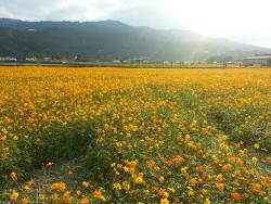 San Sing Flower Sea