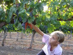Stern Winery