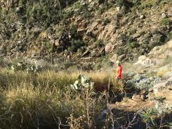 Ventana Canyon Hiking Trail