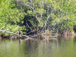 Mrazek Pond