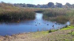 Locke Paddon Park