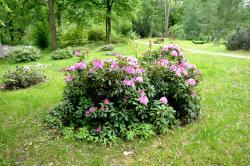 Dendrologic Garden