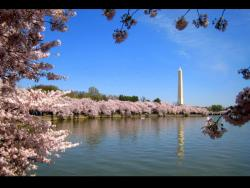 Private DC Tours