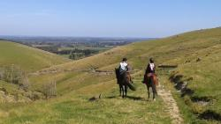 Mt Oxford Horse Trekking - Day Tours