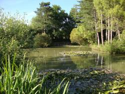 Alderwood Pond