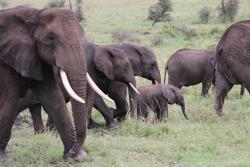 Galloping Safaris - Day Tours