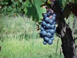 Bodega Viñas Puntanas privado