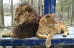 Killman Zoo