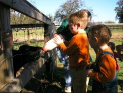 Brantley Farms Petting Zoo