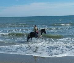 ‪Horseback Riding of Myrtle Beach‬