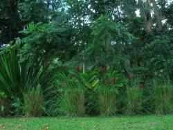 Jardin Botanico y Cultural William Miranda Marin