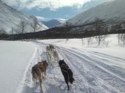 Northern Light Dog Adventure